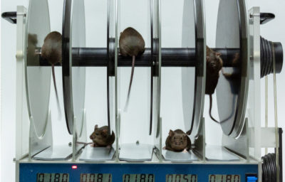 Rotarod Test for Mice